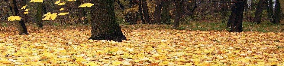 herfst-slide